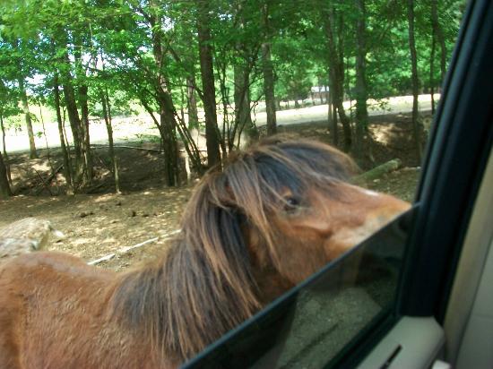 Huntsville, AL: Feeding the horse