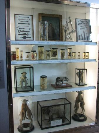 Hunterian Museum: cabinet of curiosities