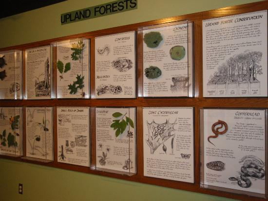Springfield Conservation Nature Center : display