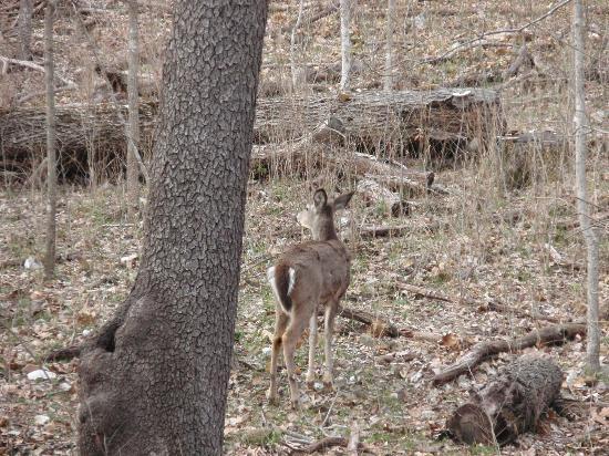 Springfield Conservation Nature Center : deer
