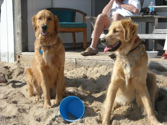 John Yancey Oceanfront Inn: Max & Louie outside the room
