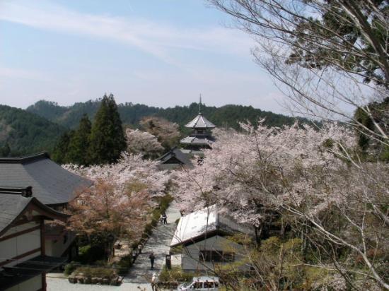 Yoshino Chogu Ruins: 吉野朝宮跡を見下ろす