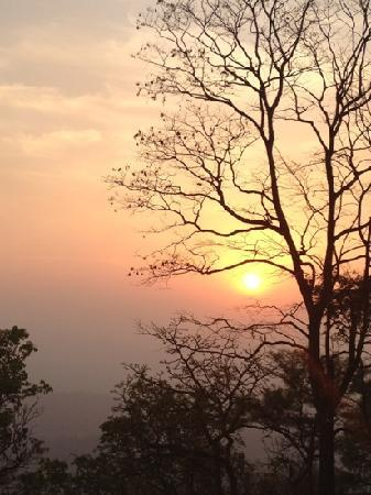 Bougainvillea Guest House Goa: la forêt indienne