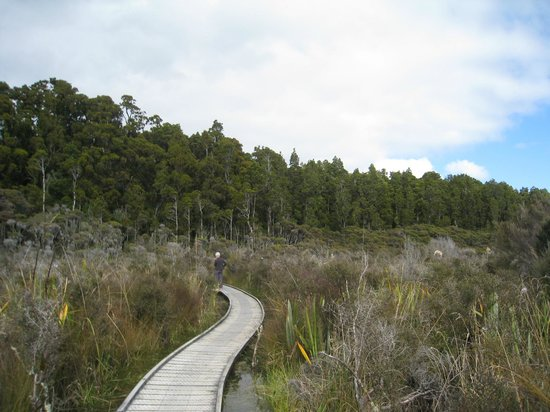 Westland National Park (Te Wahipounamu), Nuova Zelanda: Boardwalk around estuary