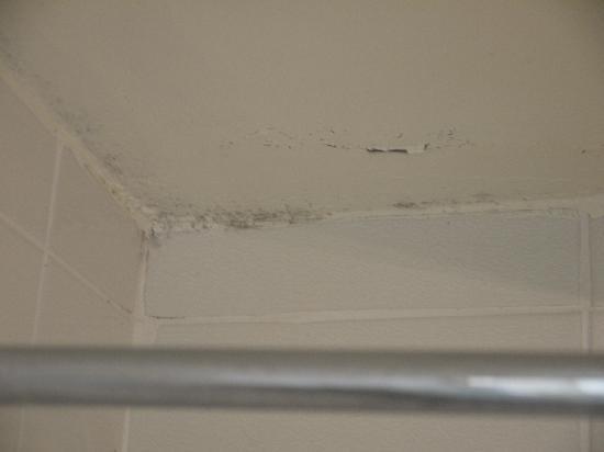 Lovelady Shield Country House Hotel: Bathroom ceiling