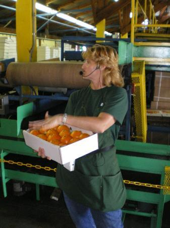 Al's Family Farms: A guide shows tour members how the citrus is packed for shipping.