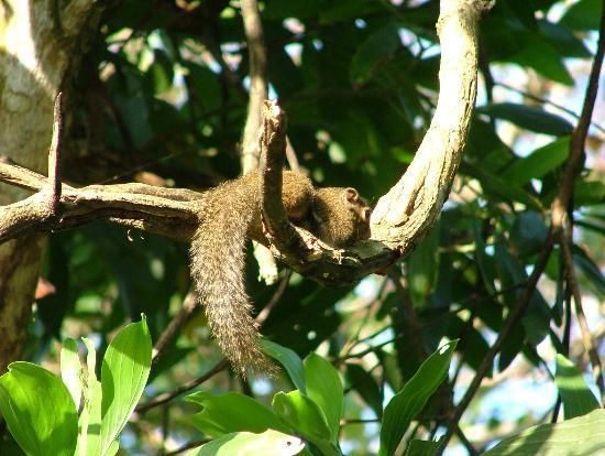 Paganakan Dii Tropical Retreat: Naughty little tree shrew!