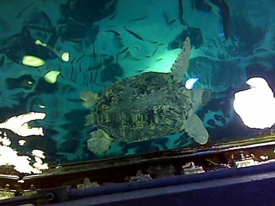 Myrtle The Turtle At The Boston Aquarium Picture Of Old