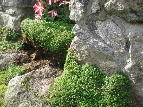 Casa D' Joao Enes Afife Residence: jardin