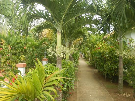 Hidden Paradise Resort Hotel: walkways