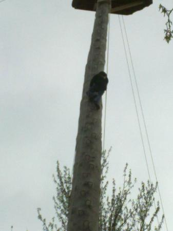 Treetop Extreme: climbing up to the top of Golliath the 100ft high pole