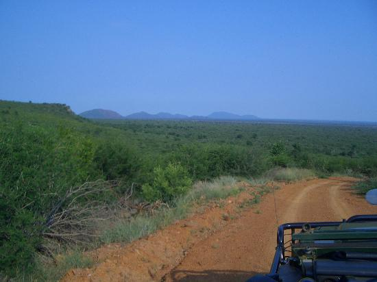 Madikwe Safari Lodge: Landschaft des Parks