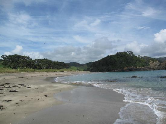Otamure Bay (Whananaki) Campsite: Strand