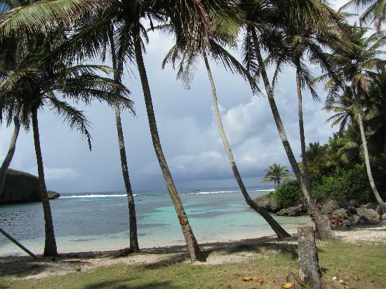 Chalet Tropical Village: Playa Madama 1 hour hike in jungle