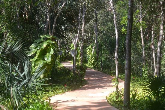 Amarte Hotel: walk way