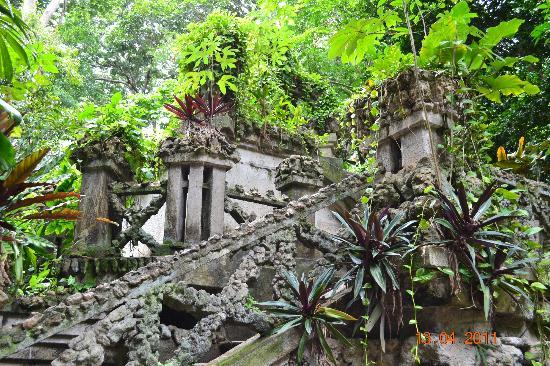Museu Paraense Emílio Goeldi : amazonic plants