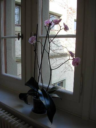 Hotel Brasserie Au Violon: Orchid in Hallway