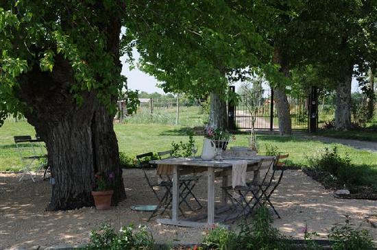 Les Amandiers: Terrasse à l'ombre du murier platane