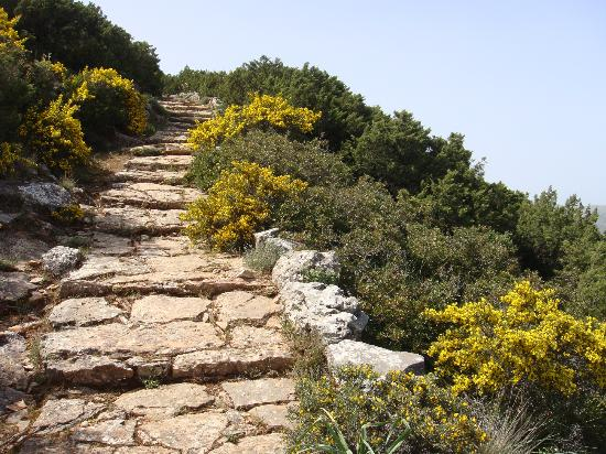 Agios Andreas Acropolis & Museum: Spring Mediterranean vegetation