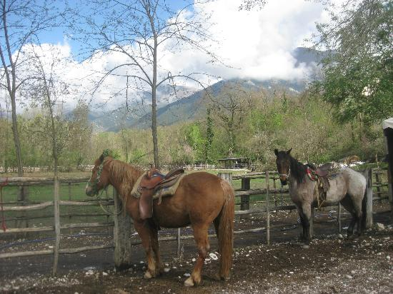 Italy Farm Stay: Horseback riding!