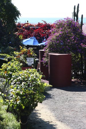 the original red shed winery