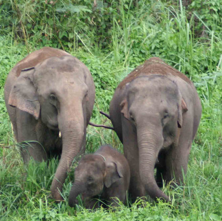 Elephant Nature Park : The beauty of the herd families