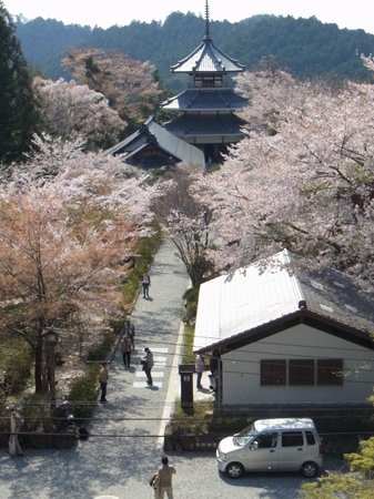 Yoshino Chogu Ruins : 蔵王堂から見た吉野朝宮跡