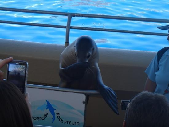 Pet Porpoise Pool - Dolphin Marine Magic: cute