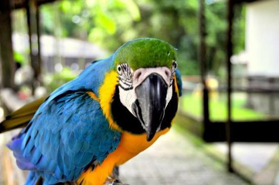 filename-bird-jpg-thumbnail0.jpg
