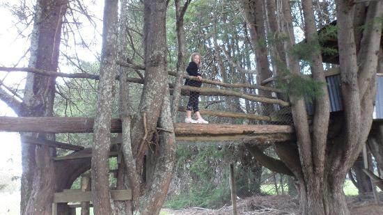 All Seasons Holiday Park Rotorua : tree hut
