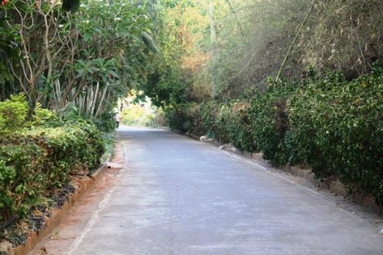 Golden Palms Hotel & Spa: jogging track