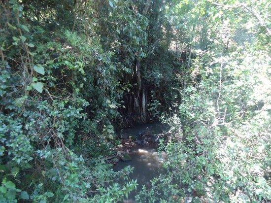 Oloolua Nature Trail: Mbagathi river