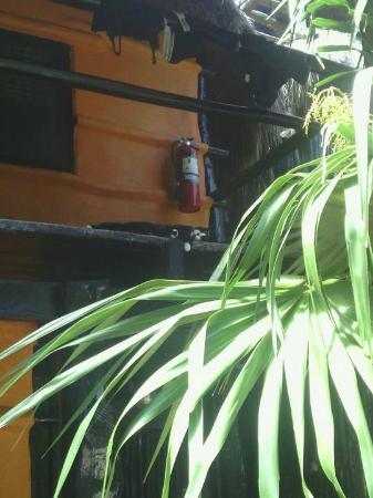 Las Palmas Maya : Le chat aussi se protège de la chaleur sur le balcon.