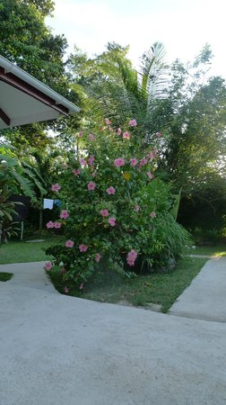 Buisson Guesthouse La Digue: Le jardin