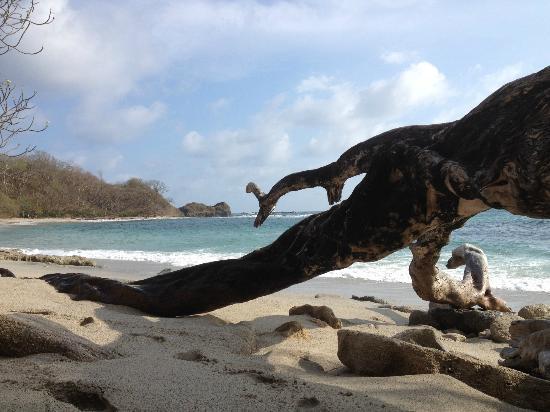 Costa Rica Yoga Spa : Beaches