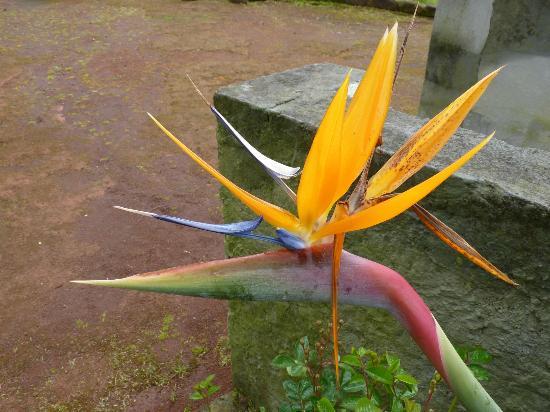 Casa Maria de Deus: Beautiful flower in a public garden