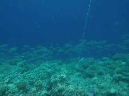 Club Med Kani : can see the shoal of fish