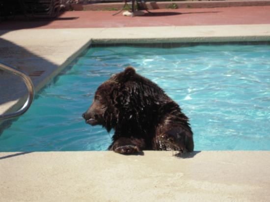 Aarchway Inn: Griz having a good swim!