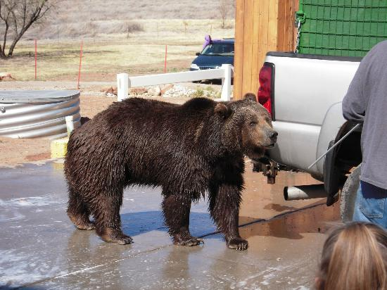 Aarchway Inn: Griz getting his prebath before his big swim.