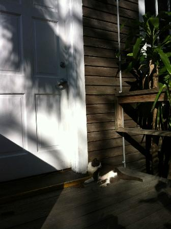 Cypress House Hotel : Key West: Ladybug the resident Kitty!