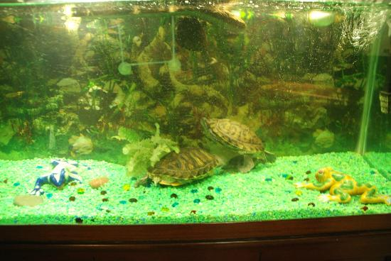 Residence Inn Waco: The Turtle Tank in the Lobby