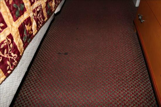Hotel Elan: Dirty Carpet