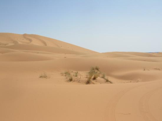 CamelTours: the top of the world....erg chebbi