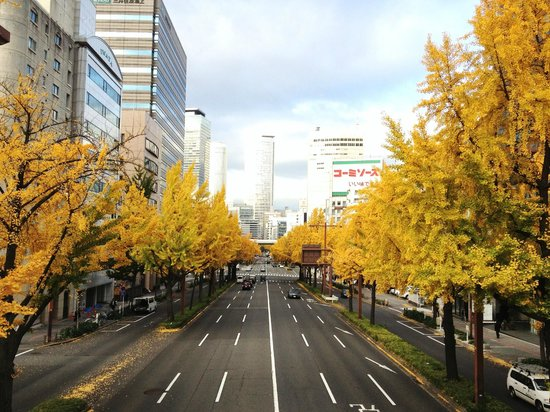 Sakura Avenue Lind with Ginkgo Tree