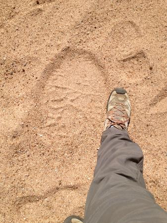 Umlani Bushcamp: my footprint next to an elephants on a bush walk