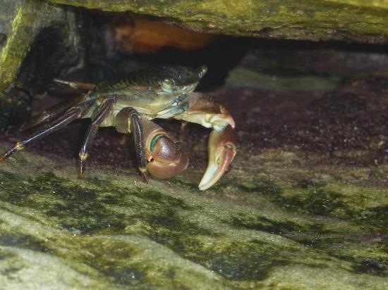 写真Glenn E. Vedder Ecological Reserve - Underwater Park and Tidepools枚