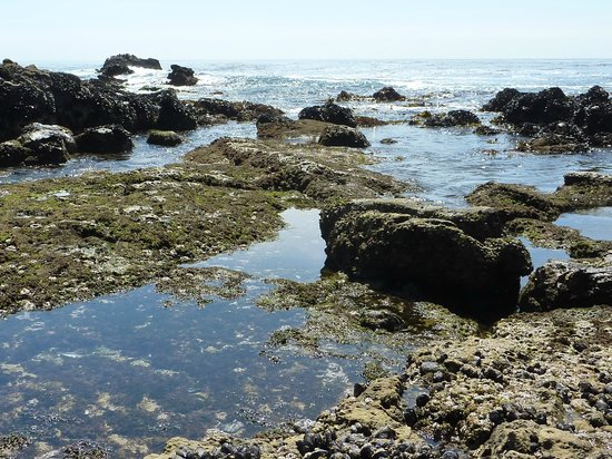 Laguna Beach, Califórnia: Tidal pool teeming with interesting organisms.