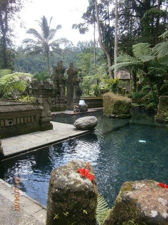 The Royal Pita Maha: The Holy Pool