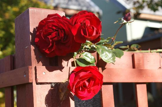 Te Wanaka Lodge : Smell the Rose's