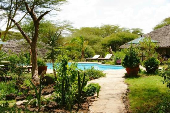 Tortilis Camp: The Pool at Tortilis